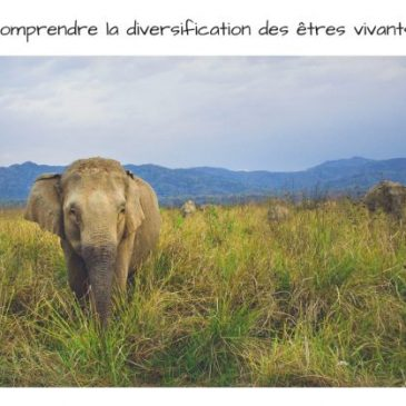 5 choses à retenir sur la diversification des êtres vivants