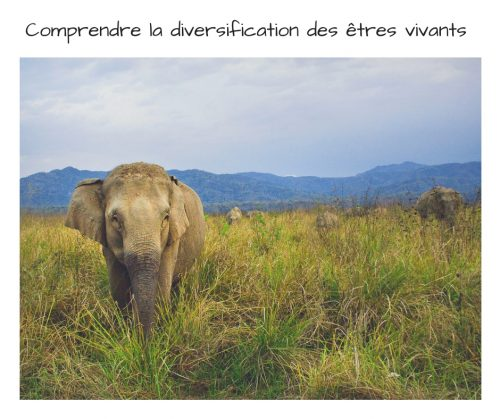 diversification des etres vivants